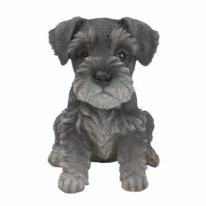 vivid-arts-min-schnauzer-puppy-pp-mins-f.png