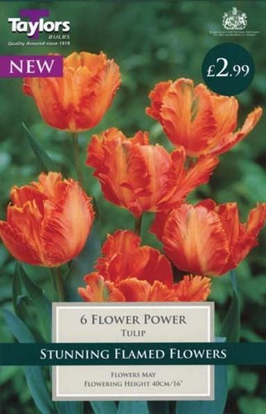 0cd670968 TULIP FLOWER POWER