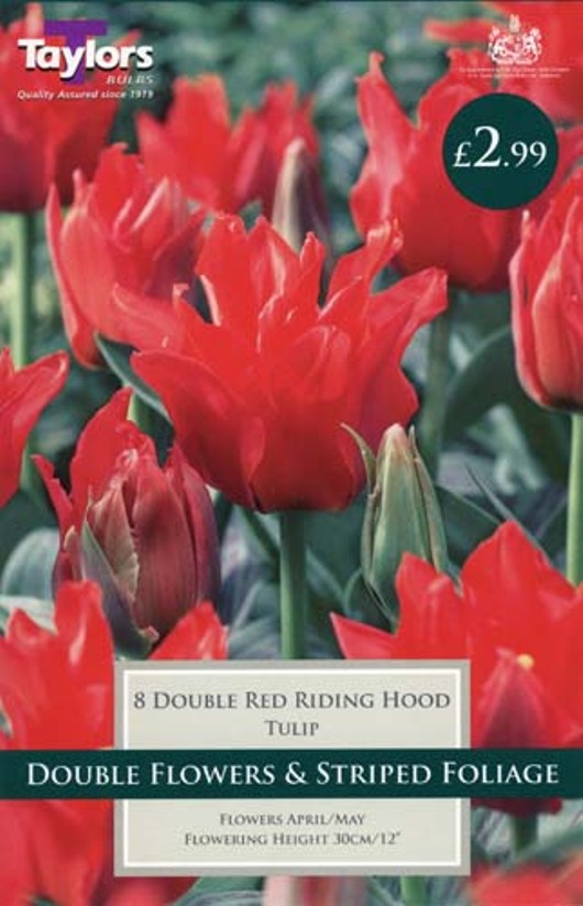 TULIP DOUBLE RED RIDING HOOD