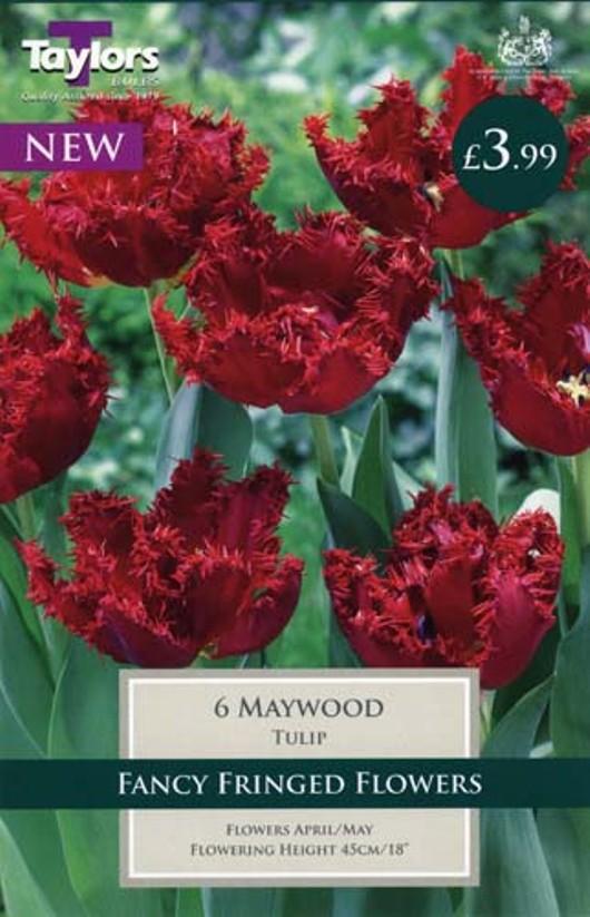Tulip Maywood