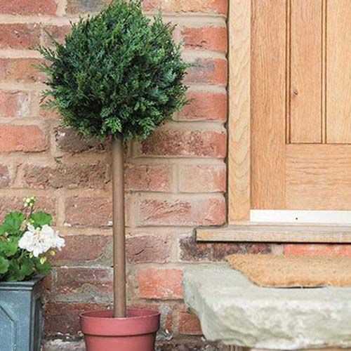 Gardman Cypress Topiary Ball Tree - 02852