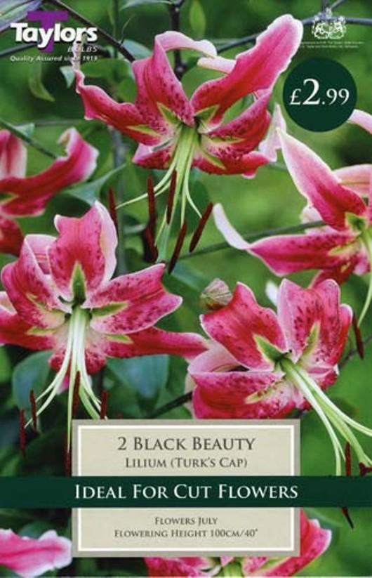 Lily Black Beauty