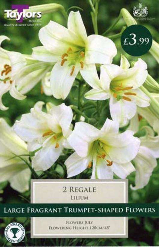 Lily Regale