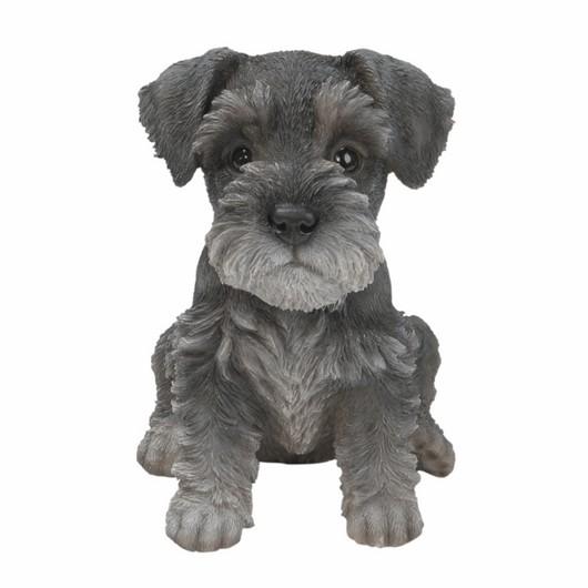 Vivid Arts Min Schnauzer Puppy Pp-Mins-F