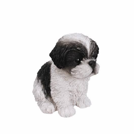 Vivid Arts Shihtzu Puppy Black And White Pp-Szbk-F