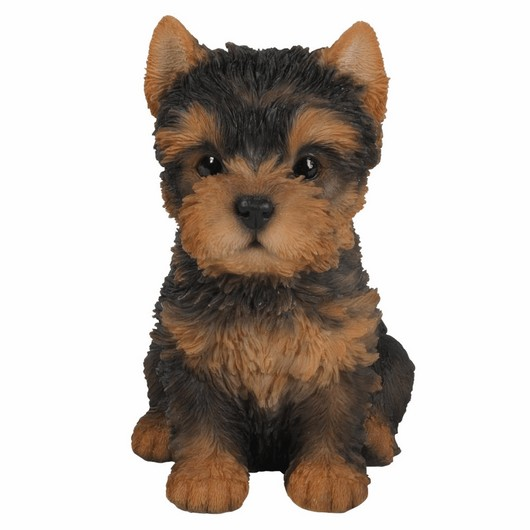 Vivid Arts Yorkshire Terrier Pup Pp-Yktr-F