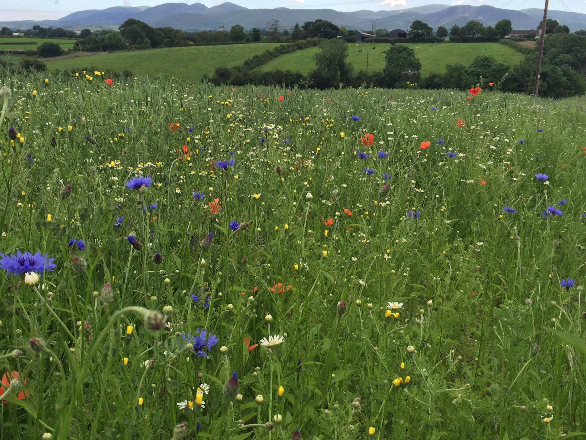 barclay-bell-wildflowers.jpg#asset:2934