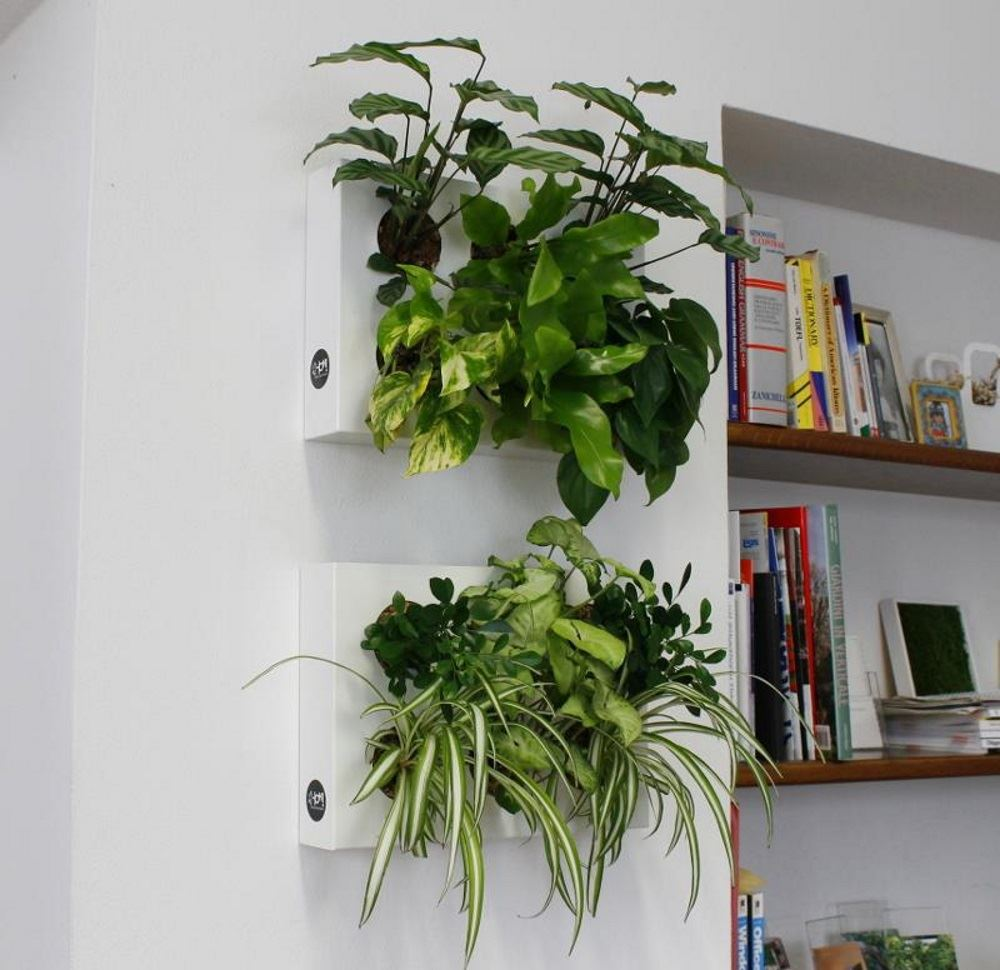 Hoh Indoor And Outdoor Wall Mounted Hanging Multi Plant