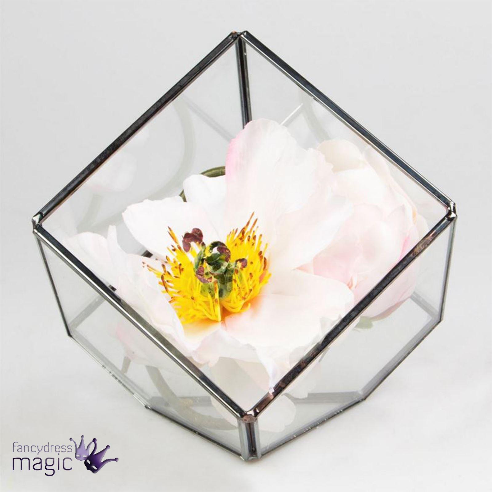 sass belle schwarz terrarium geometrisch glas succulent pflanzen pflanzgef ebay. Black Bedroom Furniture Sets. Home Design Ideas