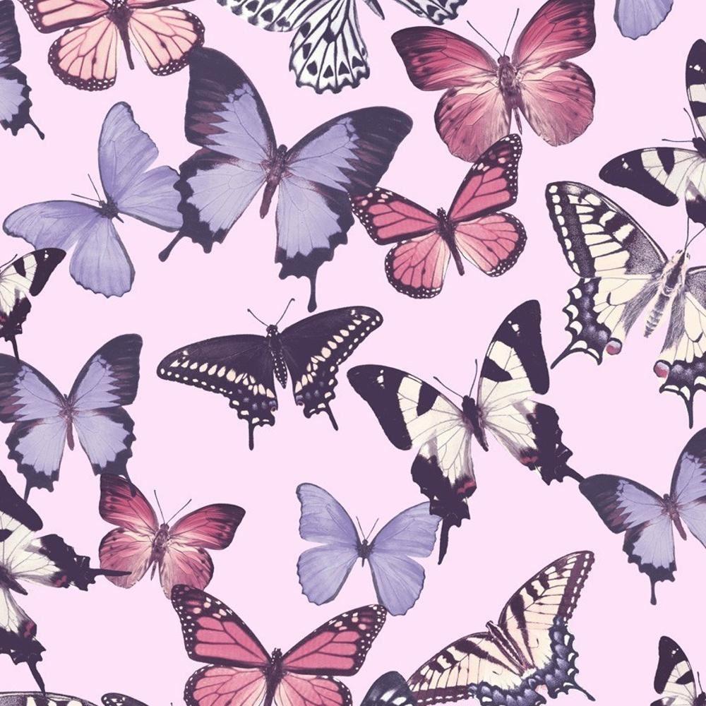 Grandeco-Botanico-motivo-farfalla-Carta-da-parati-MODERNO-TRAMA-farfalle-motivo