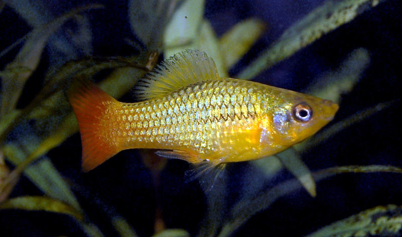 tropical fish for sale in Newport Isle of Wight - Expired | Wightbay