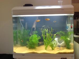marina 360 aquarium gold fish tank filter led lighting in ventnor sold wightbay. Black Bedroom Furniture Sets. Home Design Ideas