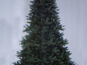 7ft black box kelso pine christmas tree in ventnor