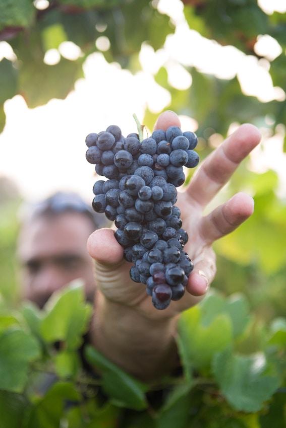 wijnspijs wijnreizen