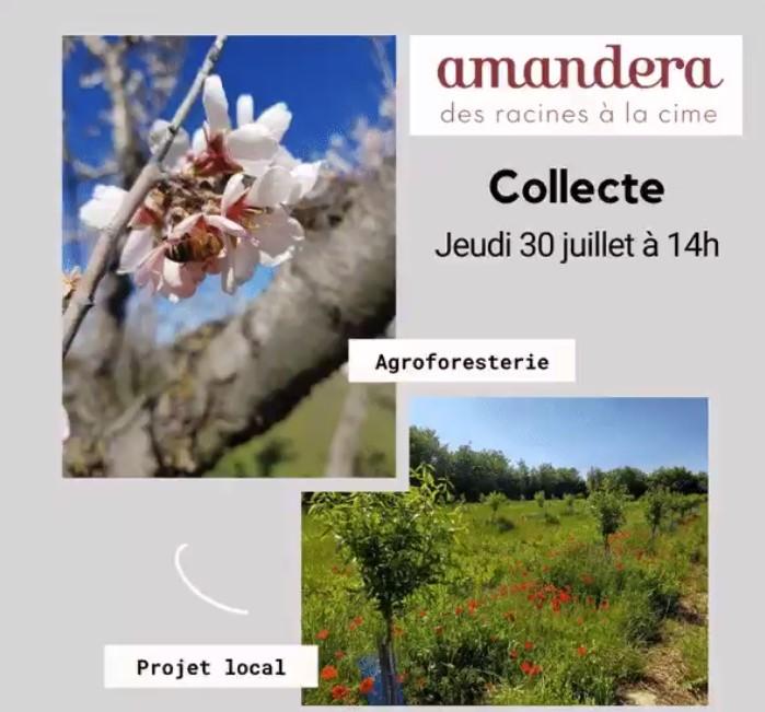 Lancement campagne Amandera