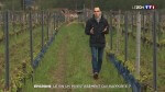 Grand format : le vin, un investissement qui rapporte ?
