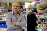 Les découvertes de chercheurs toulousains sur la maladie du foie