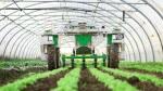 Nouveau monde. Des robots désherbants pour éviter les produits chimiques dans les champs
