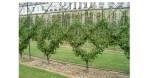 Arbre fruitier : formes libres et formes jardinées