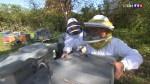 Le vol de ruches, un fléau pour les apiculteurs