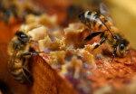 Beeguard, la start-up qui veut sauver les abeilles