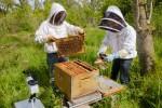 Une start-up pour la sauvegarde des abeilles - Kaizen