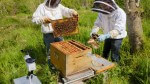 Econect transforme abeilles et escargots en sentinelles de la pollution avec l'IA
