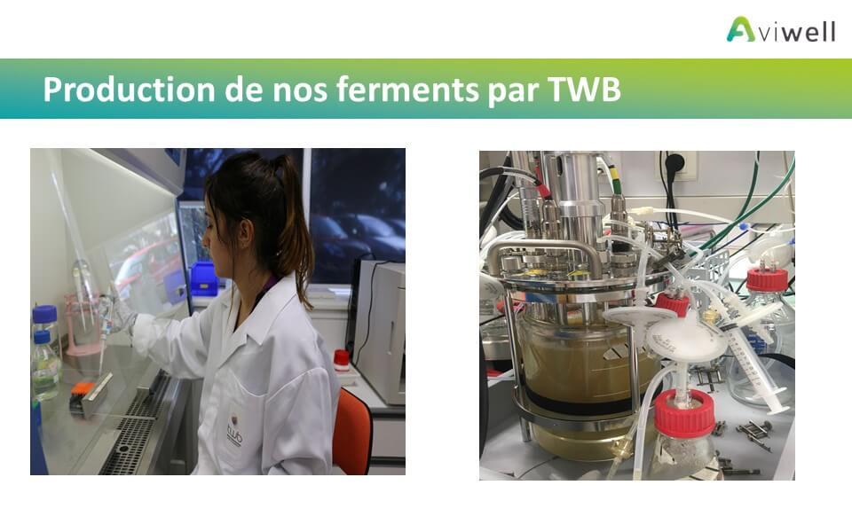 Production des ferments par TWB