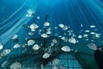 Des nurseries artificielles seront déployées en Méditerranéepour repeupler la mer