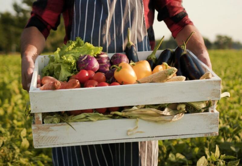 """Nous achetons des légumes à des producteurs et des fournisseurs pour livrer les restaurants et collecter leurs biodéchets : c'est la boucle """"Biodéchets contre Légumes"""" !"""