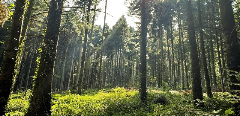 Forêt de la Bartharie (81)