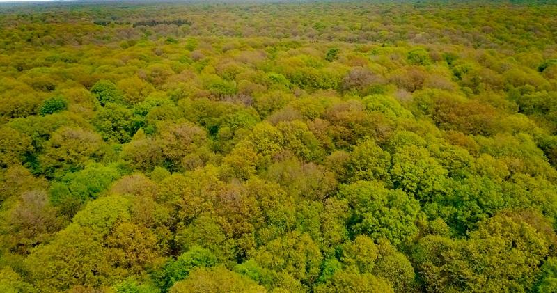 Forêt de Creney (10)
