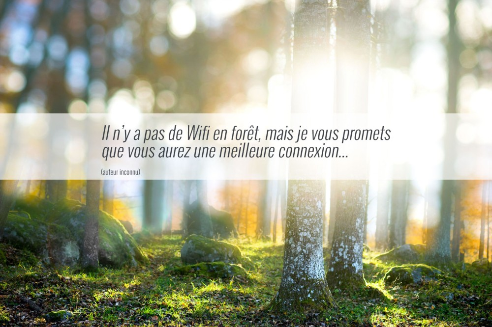Forest Finance France ouvre son capital sur WiSEED