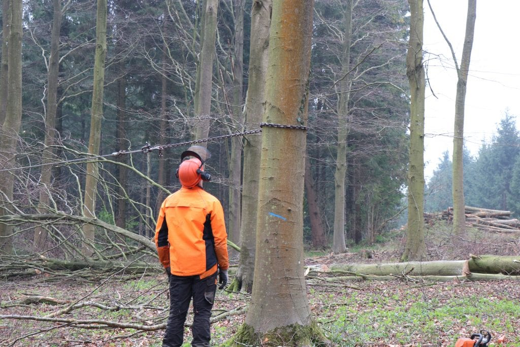 WL West & Sons Ltd sizing up a tree about to be cut down in Bavaria.