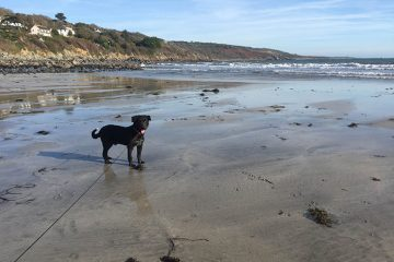 Wedding blogger Donna introduces rescue dog stanley to the cornish beach