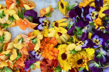Edible flowers for flavour and colour with Lafafa Catering