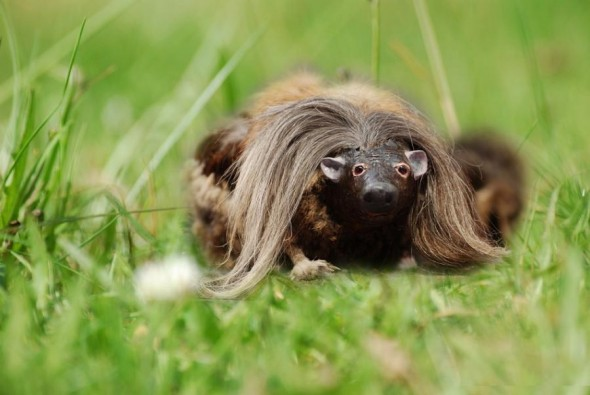 The lesser-spotted haggis