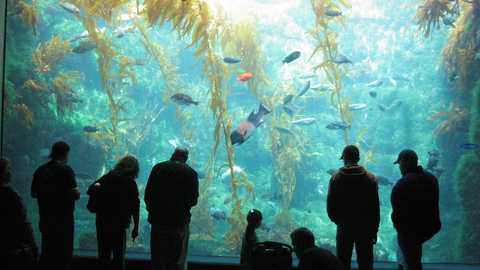 Birch aquarium things to do san diego 272 480 270
