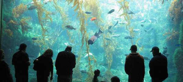 Birch aquarium things to do san diego 272 600 270
