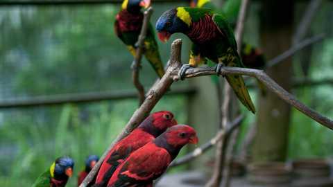 Bird park things to do kuala lumpur 150 480 270