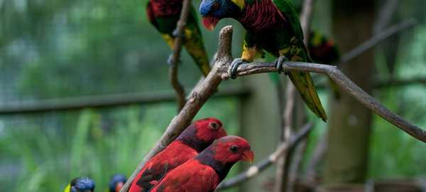 Bird park things to do kuala lumpur 150 600 270