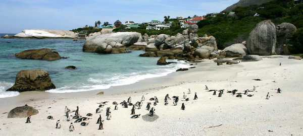 Boulders beach things to do cape town 101 600 270