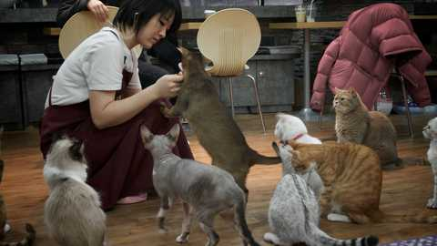 Cat cafe things to do seoul 209 480 270