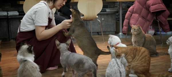Cat cafe things to do seoul 209 600 270