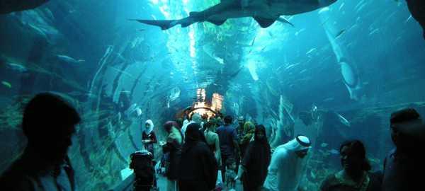 Dubai aquarium and underwater zoo things to do dubai 89 600 270