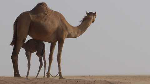 Falconry desert safari things to do dubai 87 480 270
