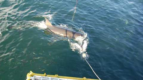 Gansbaai shark diving things to do cape town 109 480 270