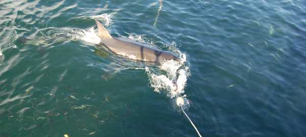Gansbaai shark diving things to do cape town 109 600 270