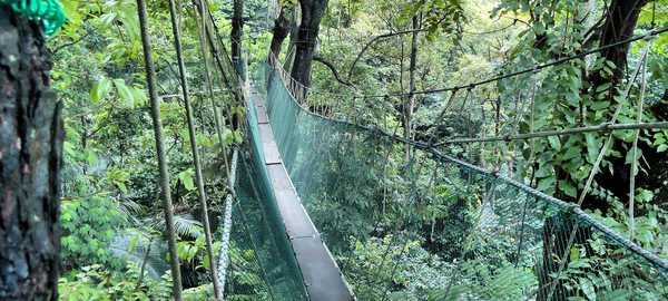 Kuala lumpur s forest reserve institute of malaysia things to do kuala lumpur 140 600 270