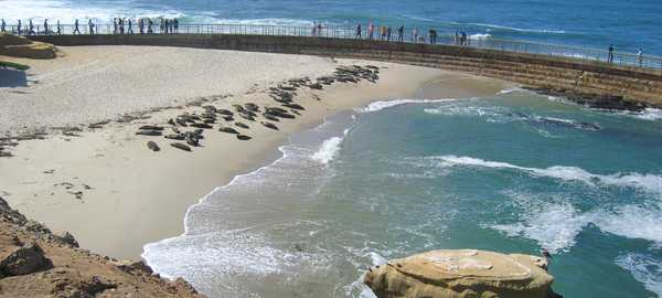 La jolla cove things to do san diego 255 600 270